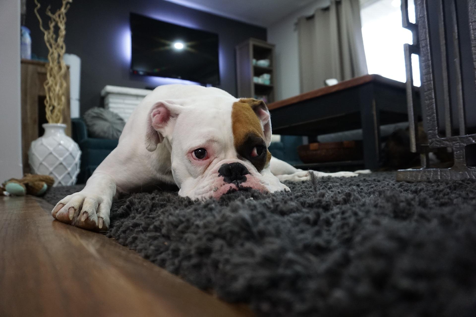 Аренда квартиры с длительной предоплатой: почему не стоит соглашаться?